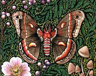 Cecropia Moth woodland natural history forest moss original gardening art reproduction colorful home decor botanical print