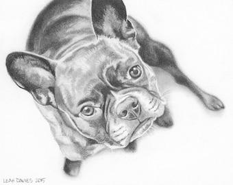 Custom Pet Portrait in Graphite - 5x7 or 5x5