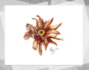 Autumn Flower Giclee Print - Realistic Flower Watercolor, White Background, Orange Mum Flower, Floral Painting