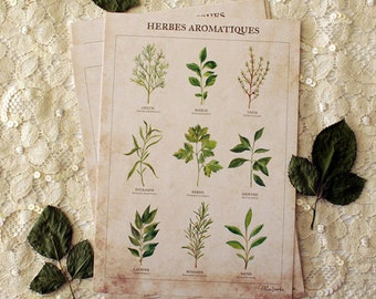 Postcard -botanical - drawing - A5 - Herbes aromatiques