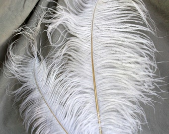 SALE--Natural White Ostrich Plume 5 Pack- Soft, Lush, High Quality