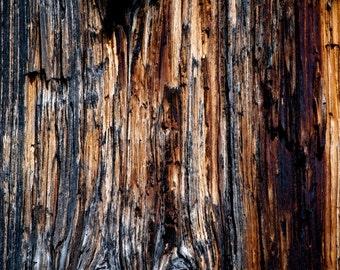 Tree, Rocky Mountain National Park, Colorado