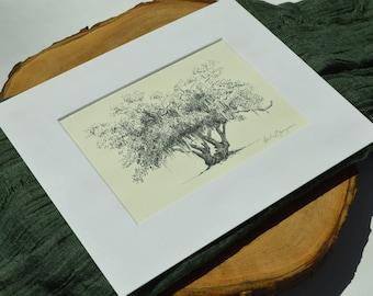 Lovers Oak Tree Pen and Ink Drawing Art Print - Historic Brunswick Georgia