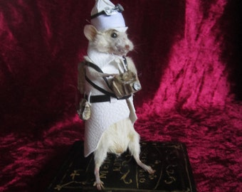 taxidermie souris reporter taxidermy mouse rat cabinet de curiosité