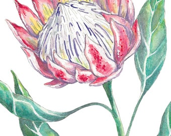 Protea Flower Watercolor // 8.5 x 11 inch print
