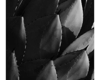 Cactus, Wall Art, Photo Print