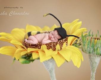 digital backdrop newborn baby girl sunflower  flower toddler