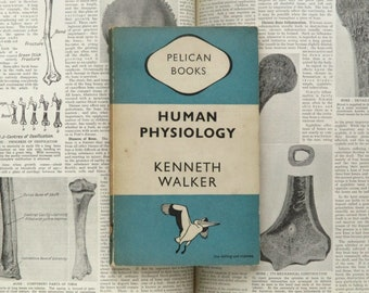 1940s human biology book Human Physiology by Kenneth Walker