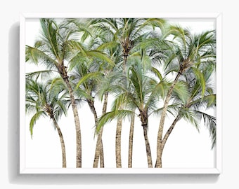 Palm Tree Print, Tropical Palm Tree Wall Art, Palm Photo, Large Poster, Green and White, Modern Minimal, Digital Download, Printable, #034