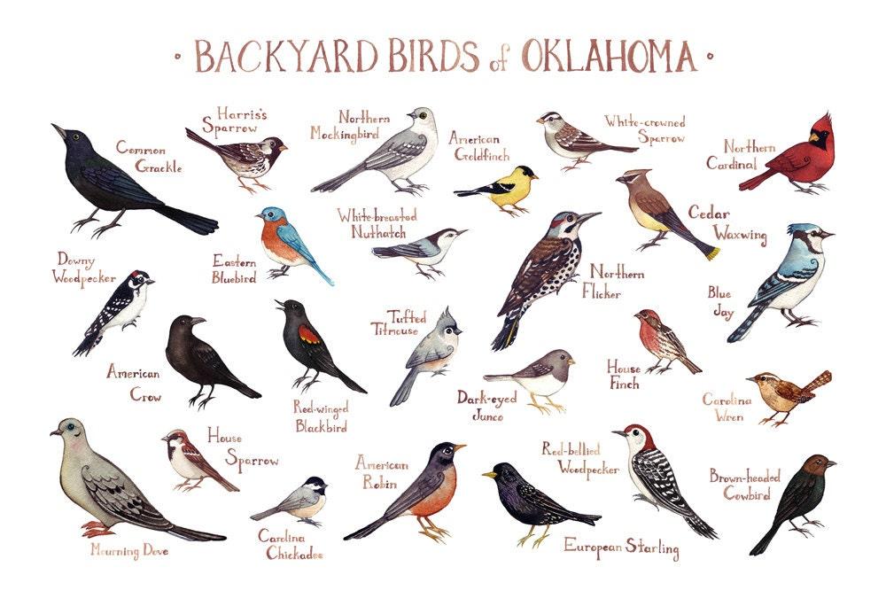 Oklahoma Backyard Birds Field Guide Art Print / Watercolor