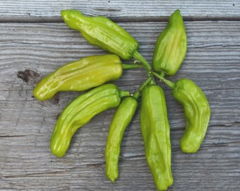Greek Pepperoncini Peppers, Golden Greek Peppers, Heirloom Pepper Seeds, Open Pollinated Vegetable Garden Seeds