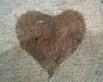 Heart shaped leaf photo