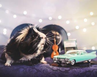 Elvis Pigsely 4x6 Framed Print