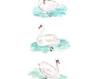 Swans Watercolor Painting - Waterfowl Painting - Swimming Birds Painting - Bird Watercolor Painting - Trumpeter Swan Watercolor