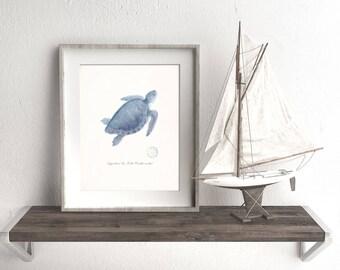 Coastal Decor Art Print - Loggerhead Sea Turtle No. 1, Endangered Species Natural History Wall Decor - blue  size options