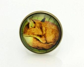 RING fox (2020B)