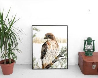 Red Tailed Hawk - Hawk Art - Realistic Hawk - by Tree Talker Art Rachael Caringella