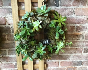 """11"""" succulent and moss wreaths"""