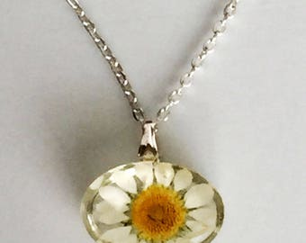 Real Daisy - Oval Flower Pendant Necklace - Wire Wrapped - Jewelry - Silver - Scottish Flower - Gift Under 25 For Her - R002