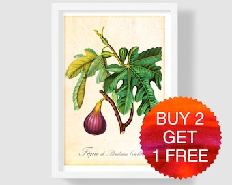 Fig Art Print, Botanical Print, Fig Wall Art, Fig Illustration, Fig Poster, Antique Botanical Art Print, Fig Kitchen Art, Ficus Carica Print