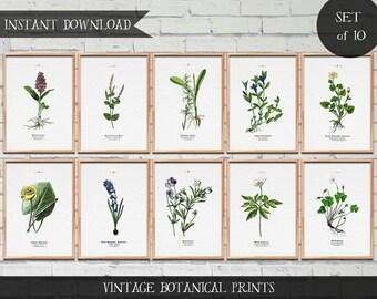 Vintage Botanical Illustrations, Set of 10 prints, Instant download Digital prints, vintage illustrations, botanical illustrations,