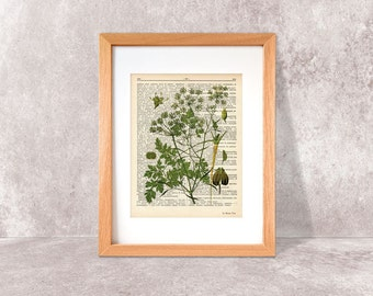 Parsley herb dictionary print-Kitchen wall art-Parsley on book page-Parsley herb print-herbs and spices prints-botany art-NATURA PICTA-DP037