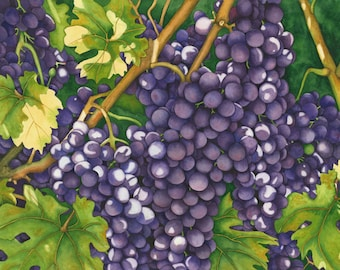 Watercolor painting...HARVEST TIME...grapes on a vine...giclee