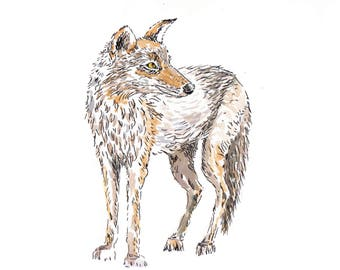 Coyote.  Matted Print from the Original Watercolor Painting