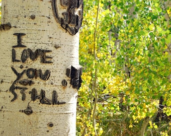 I Love You Still - nature photograph - tree forest nature message aspen romantic carving