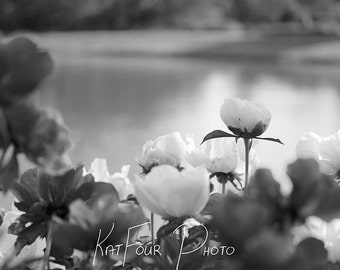 Fine Art Print, Black and White Flower Decoration, Pond and Flowers, Home Decor, Nature Photo, White and Green Photo, Water Photo