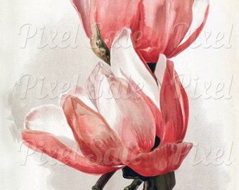 MAGNOLIA instant download, wedding clipart, digital flowers, pink red JPG digital download no.016