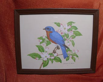 Vintage Blue Bird On Jasmine Branch Art Print Signed Richard A. Parks
