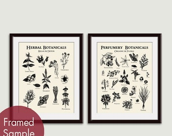 Botanical Field Study (Perfumery and Herbal) Set of 2 - Art Prints  (Featured in Black on Soft Cream) Botanical Art Print