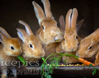 Rabbits family downloadable digital art print