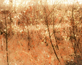 Nature Photography, wild plum bushes, white blossoms, twigs, branches, amber, gold, red, Home Decor, Fine Art Print