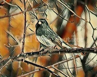 Nature Junco Bird Photo, Bird Printable Art, Bird Art, Bird Wall Decor, Instant Download, Digital Download, Canadian Photography