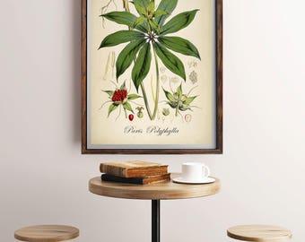 Antique Plant Illustration, Botanical Flower Art, Botanical Print, Vintage Botanical Print, Botanical Wall Art, Antique Decor,  Green Plant
