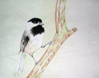 Pencil Art Work Chickadee On Branch Original Drawing-Print