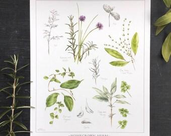Homegrown Herb Botanical Print - 8x10 inches