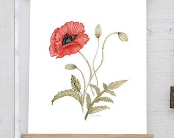 Watercolor Poppy Print - Birth Flower May June