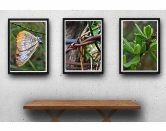 Nature photography print set, farm photography, rustic modern, garden art, farmhouse art, cottage chic, fixer upper, home decor, wall art