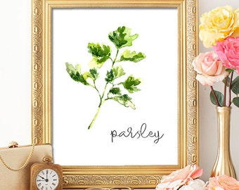 Herbs Parsley - 8x10 - Printable Art, Dorm Decor, Wall Art, Kitchen Art, Home Decor, Herb Art, Herb Prints, Herb Wall Art