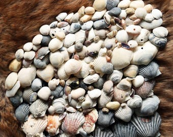 Craft Sea Shells