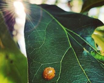 Photograph: Sunlit Leaf 5x7 print Nature Photography