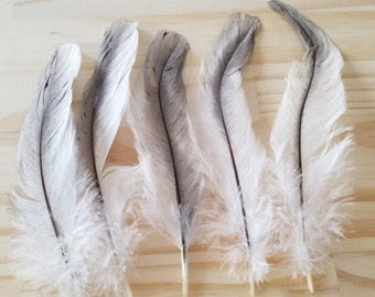 Chicken Feathers Cruelty Free Humane Naturally Molted Real Feathers #b64