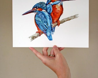 European Kingfisher Pair 2 - Archival Quality Print