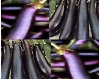 "Organic LONG PURPLE Eggplant Seeds - ITALIAN Heirloom - 2 x 10"" Firm mild flesh - 80 Days"
