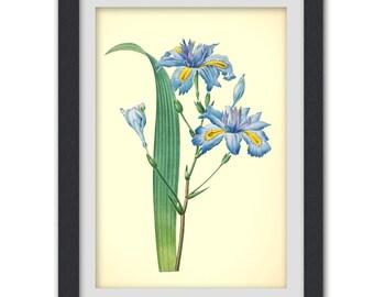 Antique Botanical print, 52, 8x11 botanical digital  art print produced from a vintage book plate.