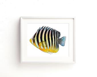 Multibar Angelfish Watercolor Fine Art Print