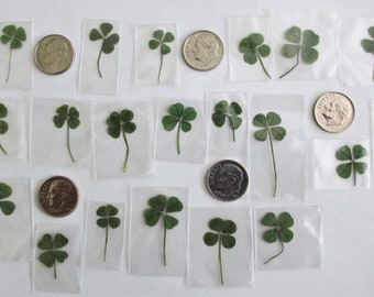 20 Extra Small 4 Leaf Clovers (20pk genuine 4L Clovers for jewelry and crafts)